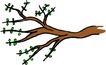 树木1592,树木,植物,