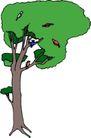树木1606,树木,植物,