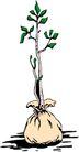 树木1620,树木,植物,