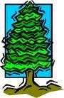树木1621,树木,植物,