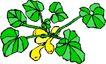 花草2925,花草,植物,
