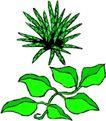 花草2926,花草,植物,