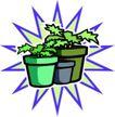花草2933,花草,植物,