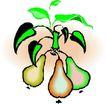 蔬菜水果2583,蔬菜水果,植物,