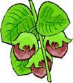 蔬菜水果2615,蔬菜水果,植物,