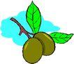 蔬菜水果2633,蔬菜水果,植物,