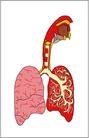 内脏0436,内脏,身体器官,