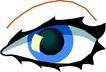 眼睛0033,眼睛,身体器官,