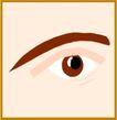 眼睛0071,眼睛,身体器官,
