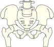 骨骼0128,骨骼,身体器官,
