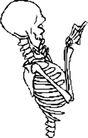 骨骼0139,骨骼,身体器官,
