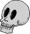 骨骼0141,骨骼,身体器官,