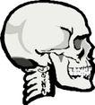骨骼0143,骨骼,身体器官,