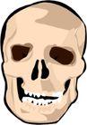 骨骼0144,骨骼,身体器官,