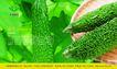 农业0001,农业,行业PSD平面模板,苦味 蔬菜 绿色 食品 苦瓜
