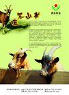 农业0006,农业,行业PSD平面模板,羊角 动物 生长 波尔羊 羊头
