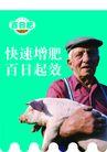 农业0009,农业,行业PSD平面模板,增肥 猪肉 乳猪 小猪 农夫