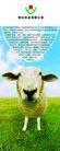 农业0017,农业,行业PSD平面模板,草食动物 草原 畜牲 养殖技术 农业公司