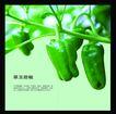 农业0029,农业,行业PSD平面模板,枝头 结果 青椒 甜椒 翠玉