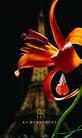 日用化工与化妆品0003,日用化工与化妆品,行业PSD平面模板,香水 红花 法国 艾菲尔铁塔 夜景