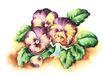 拇指女孩与花0003,拇指女孩与花,彩绘人物情景模板,绿叶 花朵 跪地 祈祷 合影