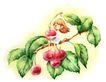 拇指女孩与花0005,拇指女孩与花,彩绘人物情景模板,苹果 季节 果树 成熟 秋天