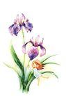 拇指女孩与花0022,拇指女孩与花,彩绘人物情景模板,小女孩 童心 草叶