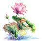 拇指女孩与花0024,拇指女孩与花,彩绘人物情景模板,睡荷叶上 荷叶 荷花