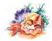 拇指女孩与花0027,拇指女孩与花,彩绘人物情景模板,海贝 贝壳女孩 睡在贝壳里