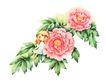 拇指女孩与花0030,拇指女孩与花,彩绘人物情景模板,花仙子 安琪儿 牡丹