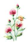 拇指女孩与花0037,拇指女孩与花,彩绘人物情景模板,花蕾 花姑娘 精灵
