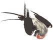 彩绘物件0181,彩绘物件,花纹边框,盘旋 收翼 转弯