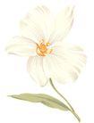 彩绘花纹0322,彩绘花纹,花纹边框,