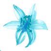 新潮色彩0019,新潮色彩,花纹边框,浅蓝色 人工培育 鲜花