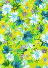 新潮色彩0021,新潮色彩,花纹边框,黄色背景 白皱菊  叶片