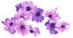 新潮色彩0030,新潮色彩,花纹边框,颜色变化 梦幻花朵 花香