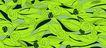 时尚纹理0017,时尚纹理,花纹边框,绿色 花叶 层压