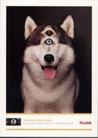 世界广告海报设计年鉴2007-10102,世界广告海报设计年鉴2007-1,世界广告海报设计年鉴2007,动物 小狗