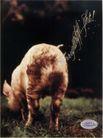 世界广告海报设计年鉴2007-20135,世界广告海报设计年鉴2007-2,世界广告海报设计年鉴2007,动物屁股