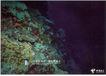 信息通讯服务0013,信息通讯服务,中国广告作品年鉴2007,中国电信 海底 礁石