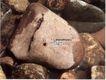 信息通讯服务0041,信息通讯服务,中国广告作品年鉴2007,石头 浸泡 干净