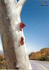 汽车及关联品0019,汽车及关联品,中国广告作品年鉴2007,马路上 大树干 嵌进去的叶子