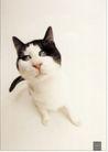 流通及服务0024,流通及服务,中国广告作品年鉴2007,猫 黑白 流通