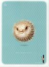 美容卫生用品0002,美容卫生用品,中国广告作品年鉴2007,刺猬 全身 尖刺