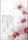 版式设计之目录集锦0022,版式设计之目录集锦,书籍装贞,桃花 花芯 盛开 红白色