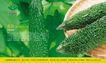 乐康蔬菜0007,乐康蔬菜,企业广告PSD分层,带刺 黄瓜 水润