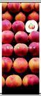 新乔水果0008,新乔水果,企业广告PSD分层,整齐 摆放 柜台