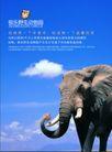 极乐野生动物园0004,极乐野生动物园,企业广告PSD分层,大象 尖锐 象牙