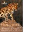 极乐野生动物园0006,极乐野生动物园,企业广告PSD分层,美洲豹 趴上 石头