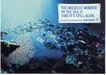 最佳创意奖-20100,最佳创意奖-2,欧洲最佳创意奖,海底 垃圾